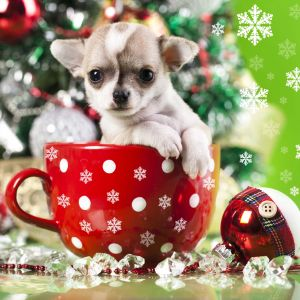 Cute Puppy In Christmas Cup
