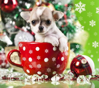 Cute Puppy In Christmas Cup , download free HD mobile